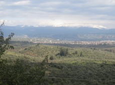 Modern day Sparta as seen from Mystras